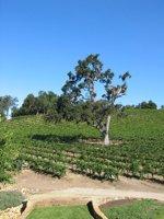 central coast wine tasting